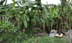 Image 3 from Land For Sale Freehold in Canggu