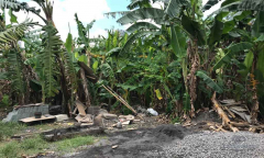 Image 1 from Land For Sale Freehold in Canggu