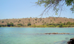 Image 2 from Beachfront land for sale freehold in Sumbawa