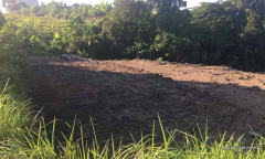Image 3 from Land For Sale Freehold in North Canggu