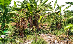 Image 2 from Land for sale freehold in Pererenan - Beach side