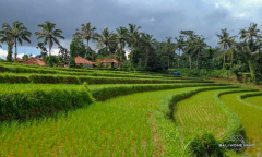 Image 1 from Land For Sale Freehold in Pupuan - Tabanan