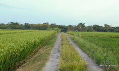 Image 3 from Land for Sale Freehold in Selemadeg, Tabanan