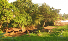 Image 2 from Riverside Land for Sale Freehold in Umalas