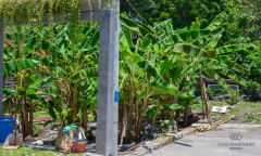 Image 2 from Land For Sale Leasehold In Babakan - Canggu