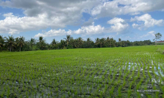 Image 2 from Land For Sale Leasehold in Buwit - North Canggu