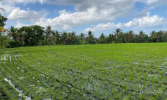 Image 1 from Land For Sale Leasehold in Buwit - North Canggu