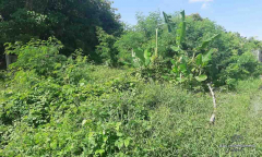 Image 2 from Land For Sale Leasehold in Canggu - Berawa