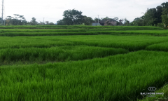 Image 3 from Land for Sale Leasehold in Canggu