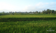 Image 1 from Land for Sale Leasehold in Tegalalang, Ubud