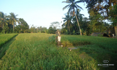 Image 2 from Land for Sale Leasehold in Tegalalang, Ubud