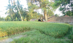 Image 3 from Land for Sale Leasehold in Tegalalang, Ubud
