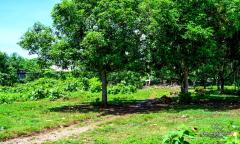 Image 3 from Land For Sale Leasehold in Uluwatu, Bukit Peninsula