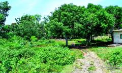 Image 1 from Land For Sale Leasehold in Uluwatu, Bukit Peninsula