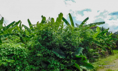 Image 1 from Land For Sale Leasehold Perfectly Located Batu bolong - Canggu