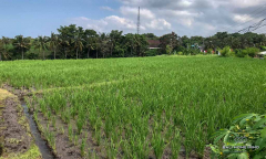 Image 3 from Land With Ricefield View For Sale in Tanah Lot Area