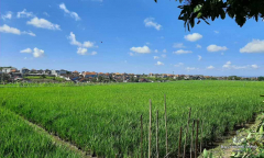 Image 1 from Land with Ricefield View For Sale Leasehold in Buduk - North Canggu