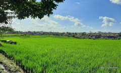 Image 2 from Land with Ricefield View For Sale Leasehold in Buduk - North Canggu