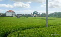 Image 2 from Land With Ricefield View For Sale Leasehold in North Canggu