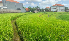 Image 1 from Land With Ricefield View For Sale Leasehold in North Canggu