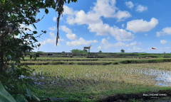 Image 2 from Land with Ricefield View For Sale Leasehold in Tuka - North Canggu