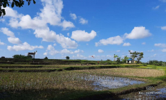 Image 1 from Land with Ricefield View For Sale Leasehold in Tuka - North Canggu