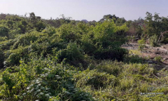 Image 1 from Land for Sale Freehold nearby the beach in Canggu - Batu Bolong
