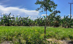 Image 1 from Perfectly located land for sale freehold in Canggu - Batu Bolong