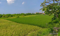 Image 1 from Ricefield view land for sale freehold in Canggu - Batu Bolong