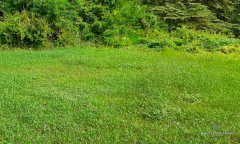 Image 1 from Ricefield view land for sale freehold in Canggu - Padonan