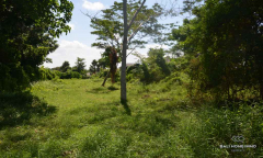 Image 2 from Ricefield view land for sale freehold in Canggu - Pererenan