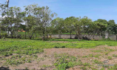 Image 3 from Ricefield view land for sale freehold in Umalas